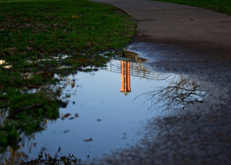 Still pools of water, like the puddle above, are ideal places for mosquitoes to lay their eggs. Trinity is fighting the spread of mosquito-borne illness, West Nile Virus specifically, by eliminating stagnant water around campus. Photo by James Shultz.