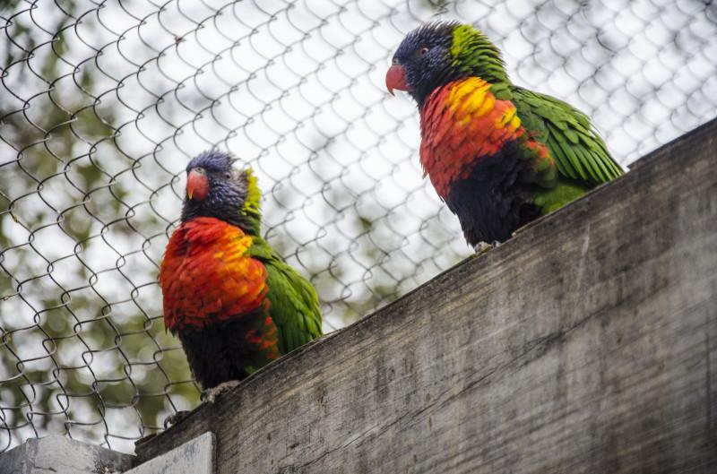 Zoo+MB_9