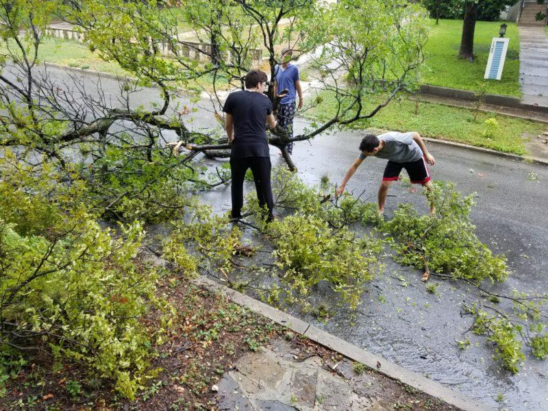 Seniors Cole Murray, Constantine Kouldukis and Gabriel Levine remove a tree from the yard of their house on Princess Pass, adjacent to campus. Photo by Daniel Conrad