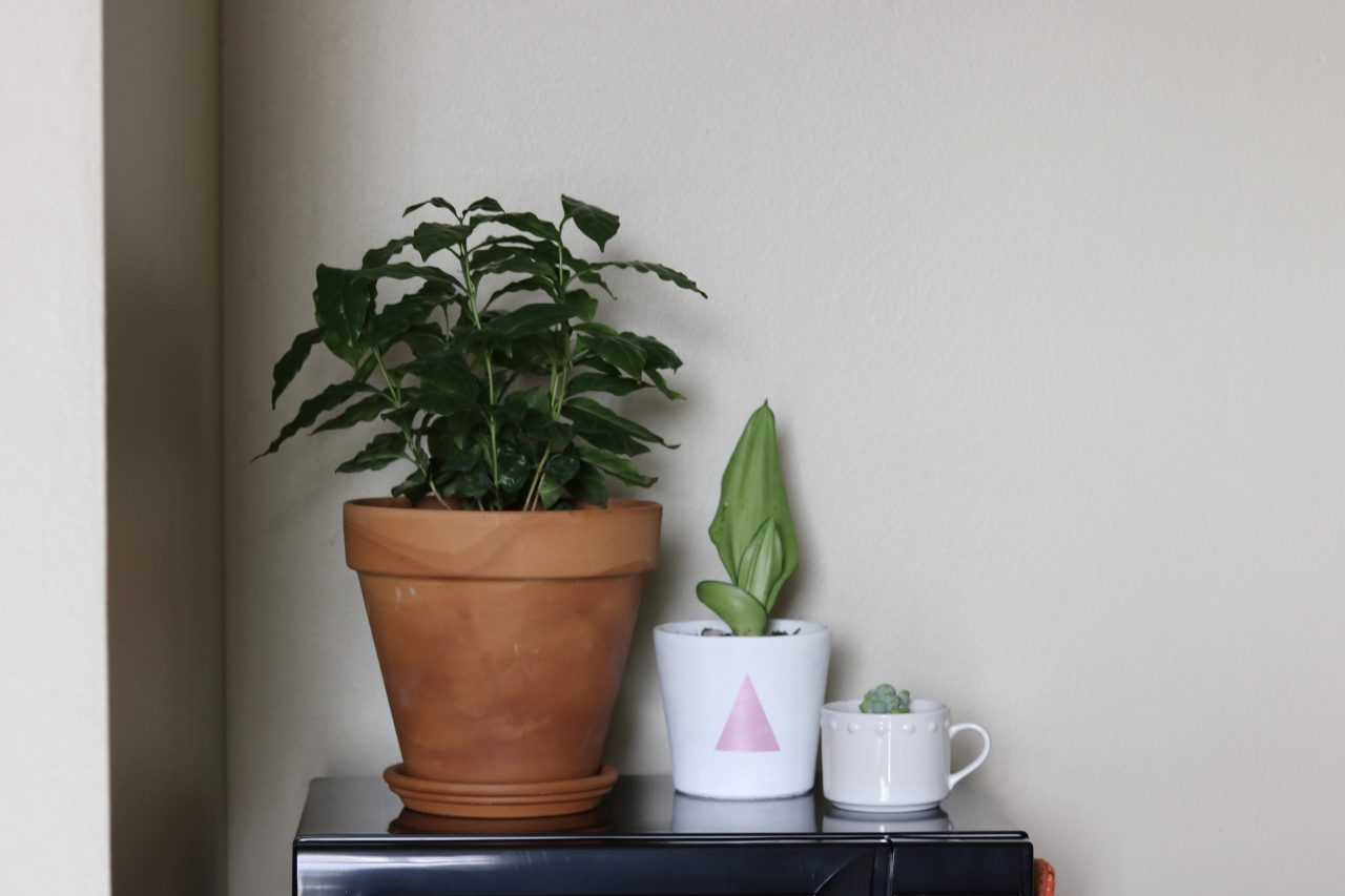 A student's guide to taking care of your houseplants