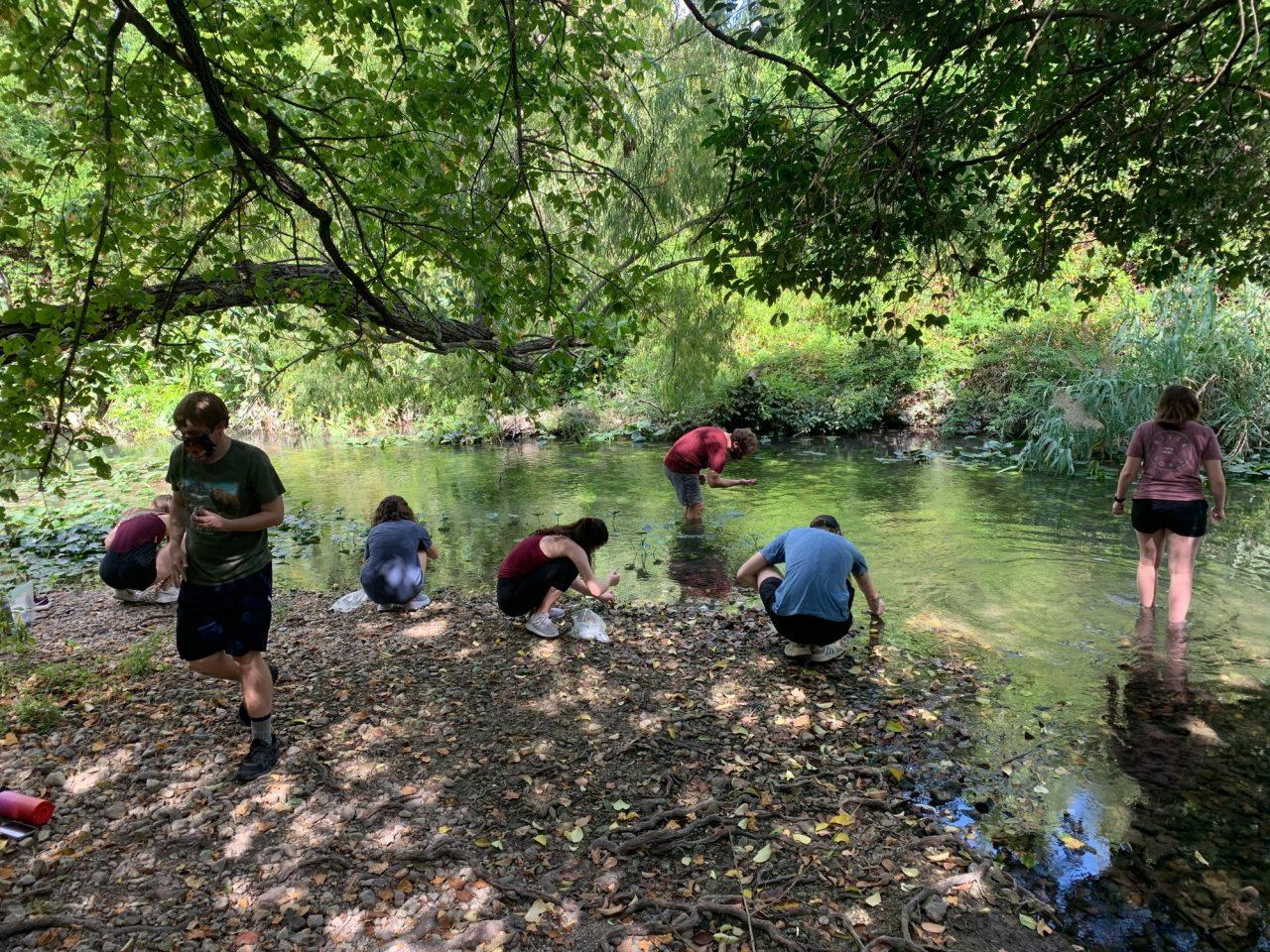 Kelly Lyon's class two weeks ago in Brackenridge Park, collecting algae and Cyanobacteria.  Provided by Kelly Lyons.