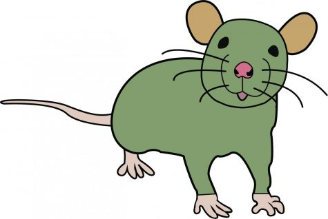 Rat spotted in CSI